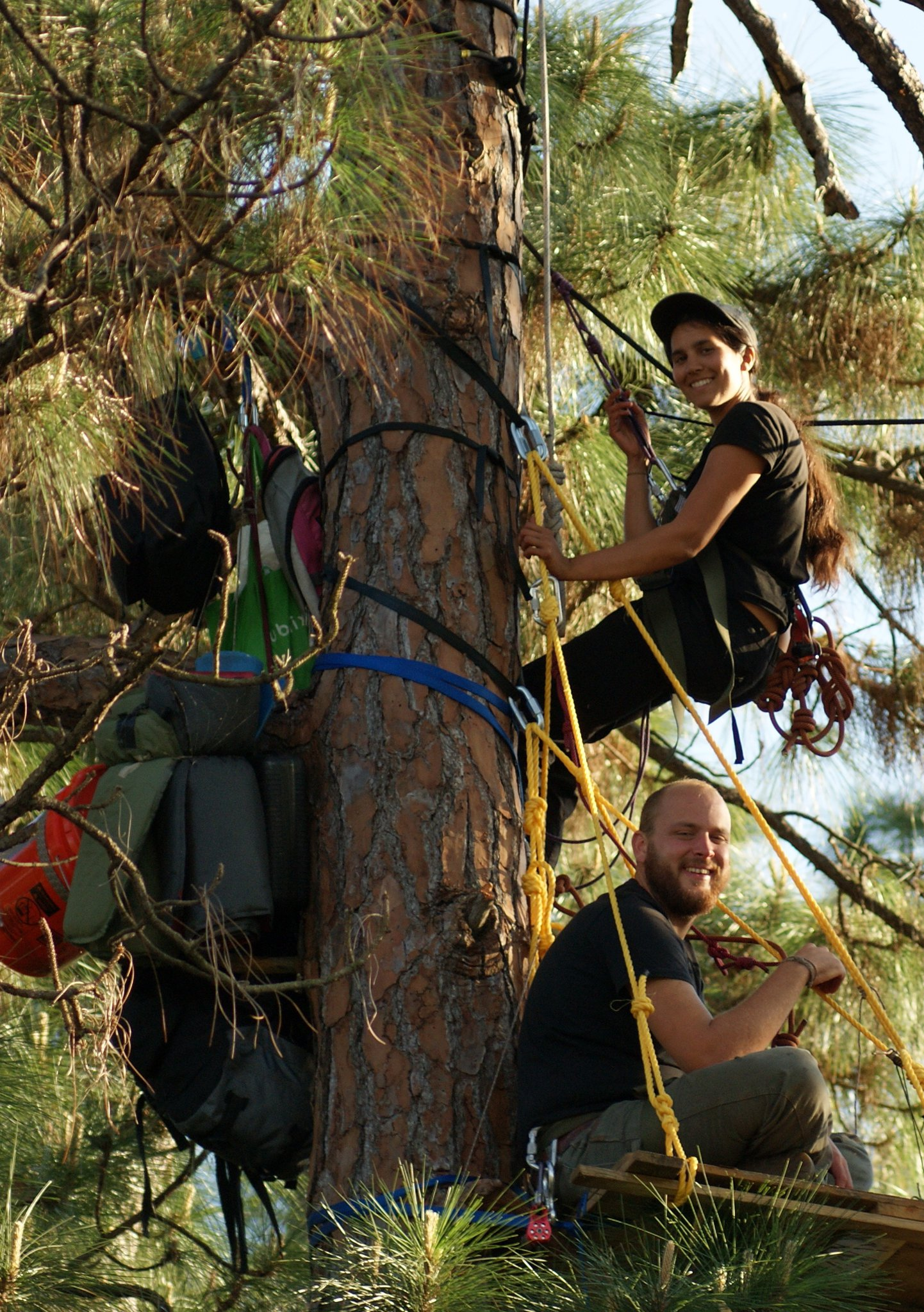 RICO Act Used Against Tree Sitters
