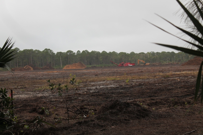 Workers clearing the forest: December 9, 2014